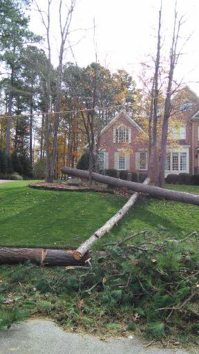 Free Stump Grinding with treeremovals.