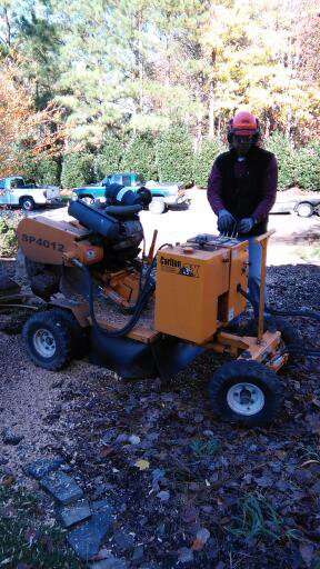 Affordable Stump Grinding. Raleigh, NC