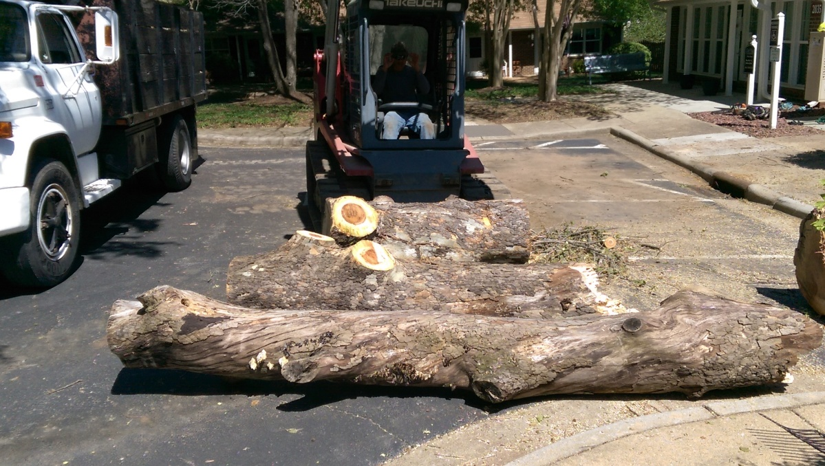 Raleigh, Cary,Triangle Area Tree Services