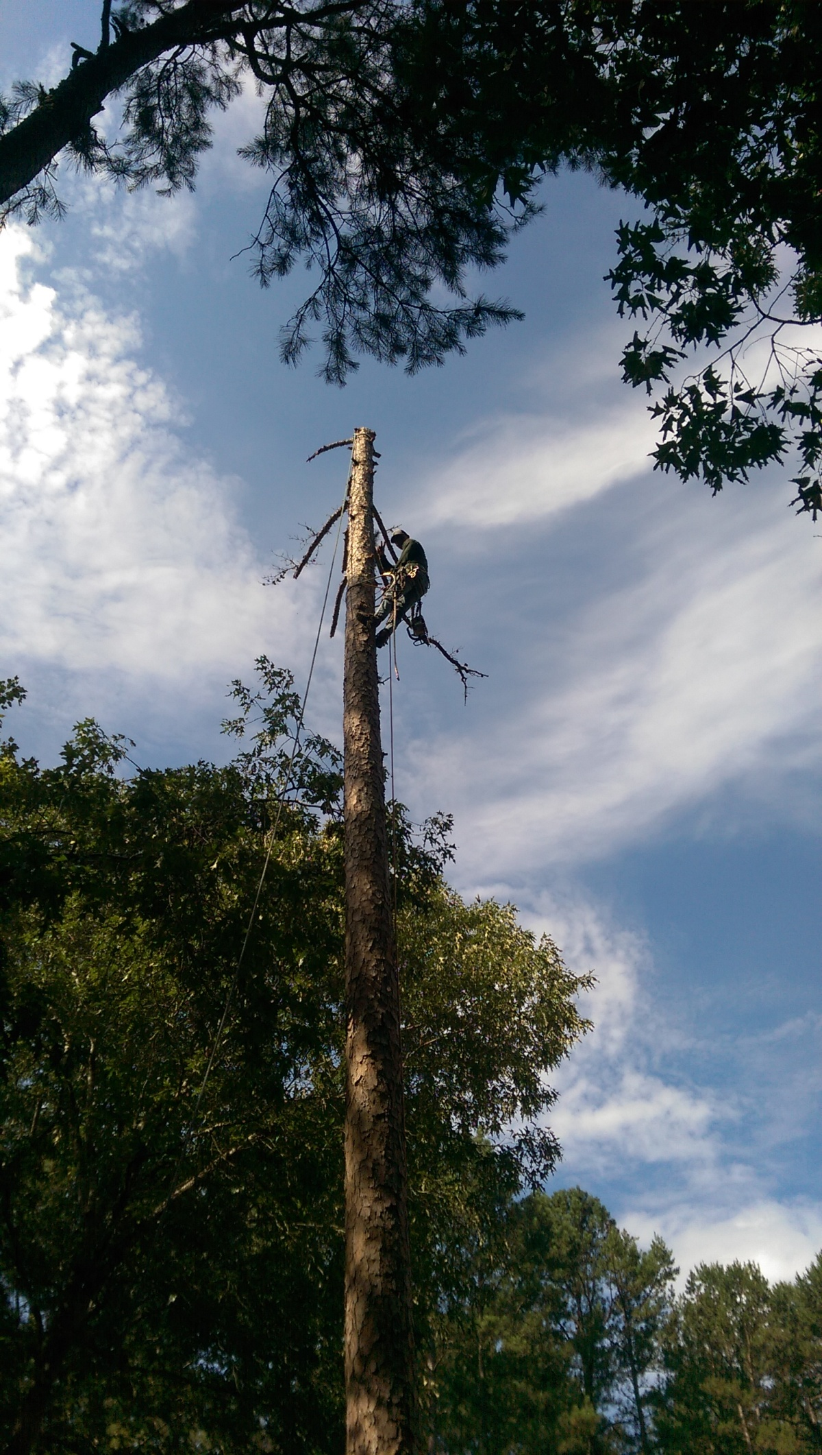Affordable Tree Removal, and Stump Grinding. Raleigh, NC